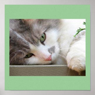 Gato con los ojos verdes póster