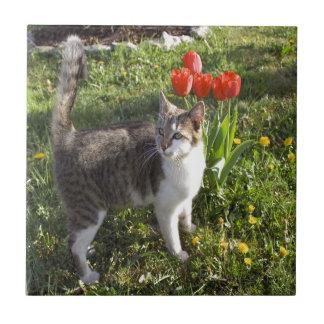 Gato con los tulipanes azulejo cuadrado pequeño