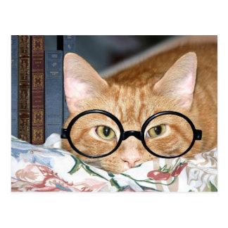 Gato con los vidrios y los libros postal
