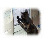 Gato con PC Tarjeta Postal