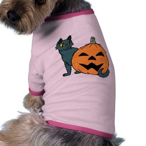 gato con una calabaza ropa de perro