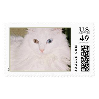 Gato con una mirada fija sellos