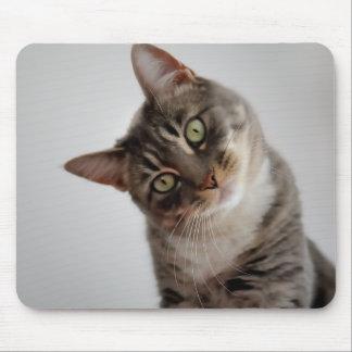 gato confuso alfombrilla de ratones