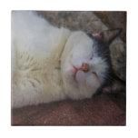 Gato contento que duerme en ella detrás azulejo