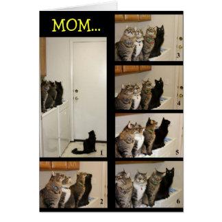 Gato contra tarjeta del día de madre de la mosca