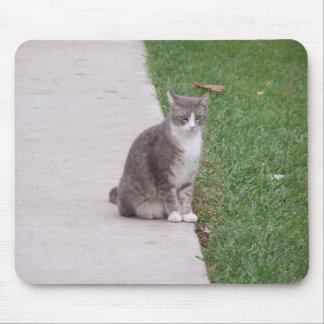 Gato contrapesado tapete de raton