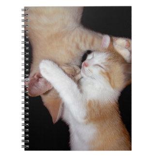 """""""Gato cuaderno de Luv #5"""""""