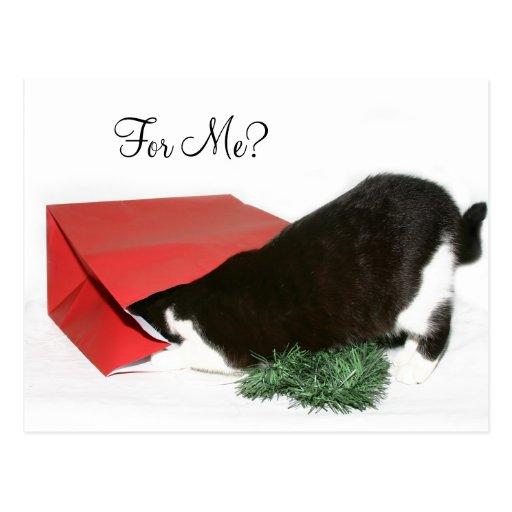 Gato curioso del navidad tarjeta postal