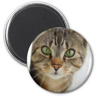 gato curioso imán redondo 5 cm
