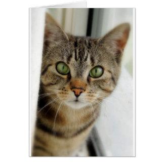 gato curioso tarjeton