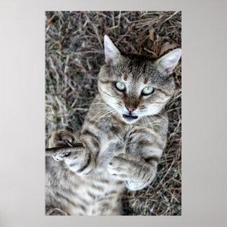 Gato de Badass Póster