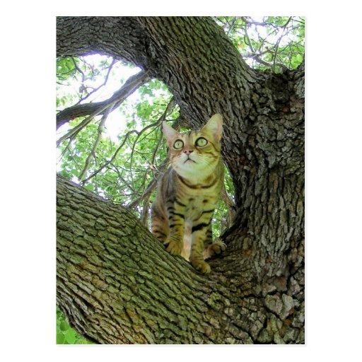 Gato de Bengala en árbol Tarjetas Postales
