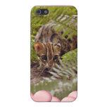 Gato de Bengala fresco y iPhone 5 Carcasa