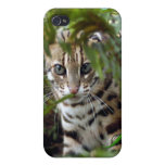 Gato de Bengala iPhone 4/4S Fundas