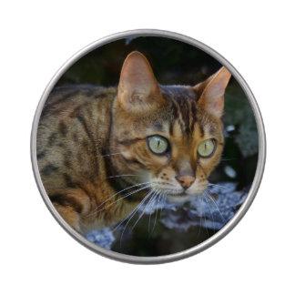 Gato de Bengala que se escabulle Frascos De Caramelos