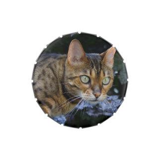 Gato de Bengala que se escabulle Frascos De Dulces