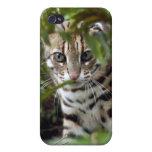 Gato de Bengala y iPhone 4 Cobertura