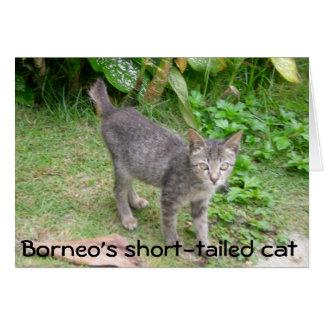 Gato de Borneo Felicitaciones