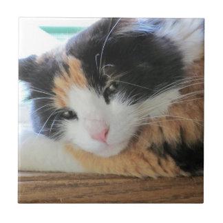 Gato de calicó coqueto azulejo cuadrado pequeño