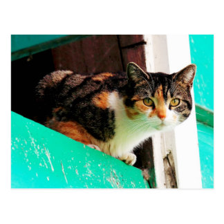 Gato de calicó curioso en la repisa del aquamarine tarjetas postales