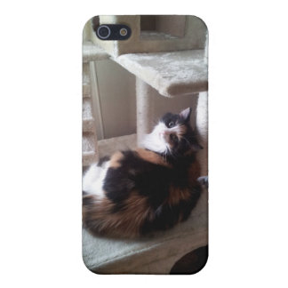 Gato de calicó en árbol del gato iPhone 5 fundas