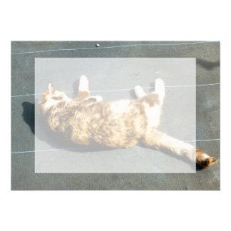 gato de calicó en el revestimiento lateral lejos comunicados personalizados