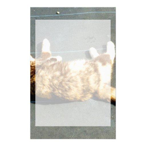 gato de calicó en el revestimiento lateral lejos papelería