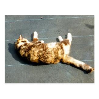 gato de calicó en el revestimiento lateral lejos postal