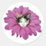 Gato de calicó en flor pegatina redonda