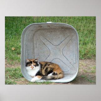 Gato de calicó en lavabo póster