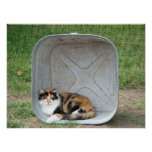 Gato de calicó en lavabo posters