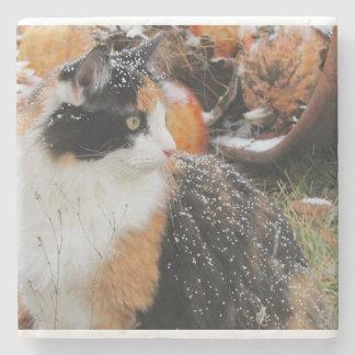 Gato de calicó en tormenta de la nieve posavasos de piedra
