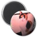 Gato de calicó imanes de nevera