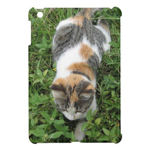 Gato de calicó iPad mini cobertura