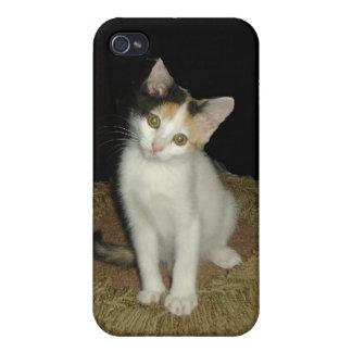 Gato de calicó iPhone 4/4S carcasas