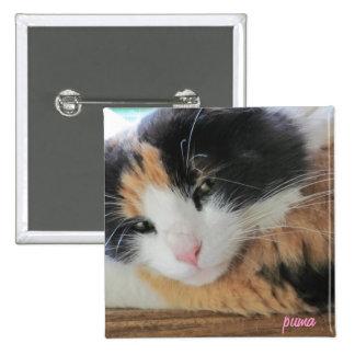 Gato de calicó lindo del puma pin cuadrada 5 cm