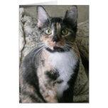 Gato de calicó lindo, tarjeta de cumpleaños de Pur