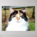 Gato de calicó poster