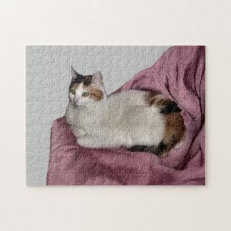 Gato de calicó rompecabeza con fotos