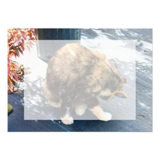 gato de calicó que lame las piernas traseras invitacion personal