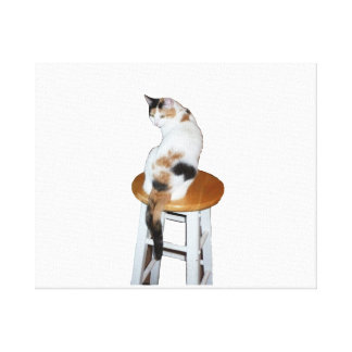 Gato de calicó que se sienta lona envuelta para galerias