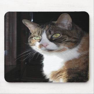 Gato de calicó tapetes de ratones