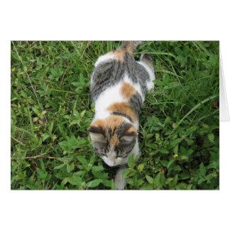 Gato de calicó tarjeta de felicitación
