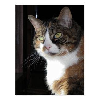 Gato de calicó postal
