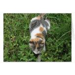 Gato de calicó tarjeton