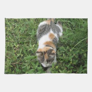 Gato de calicó toalla