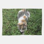 Gato de calicó toallas
