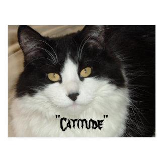 Gato de Catitude con una actitud Tarjeta Postal