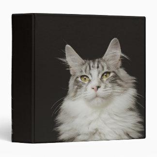 """Gato de Coon adulto de Maine Carpeta 1 1/2"""""""