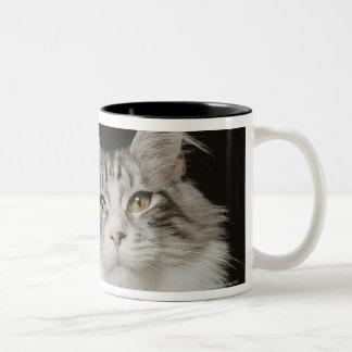 Gato de Coon adulto de Maine Taza De Café De Dos Colores